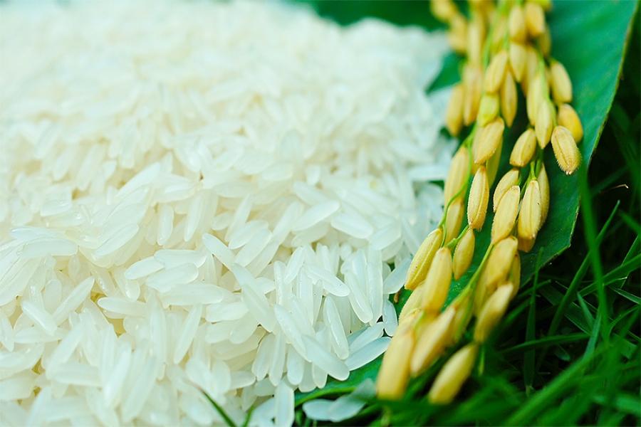 Kết quả hình ảnh cho gạo nàng hoa